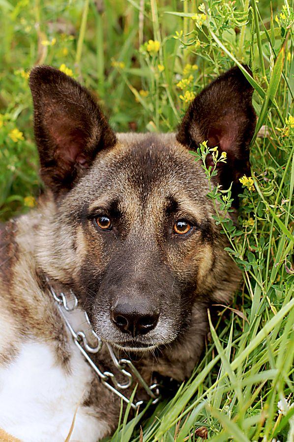 Молодой пёс Эдмунд в дар